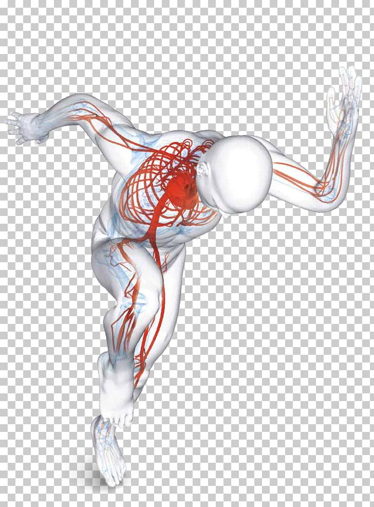 Terapia Físico Vascular